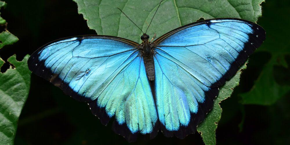 el jardín de mariposas colombia