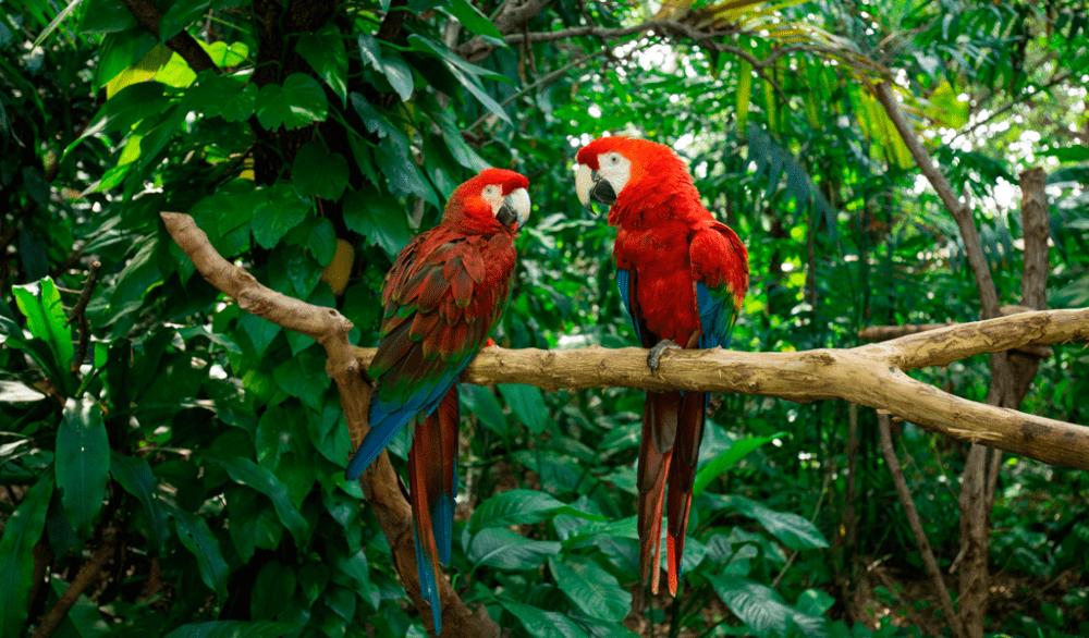 Fauna de Colombia